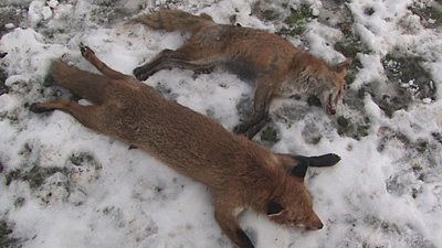 http://3.bp.blogspot.com/_kh88spY3Bns/TSERMsUdflI/AAAAAAAAAgg/dgix3zSE4ZI/s1600/BIG+FOX.jpg