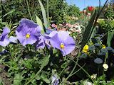Цветы в парке Берлина by TripBY.info