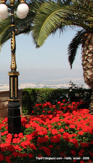 Хайфа, сады, цветы