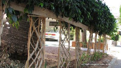 живая изгородь декоративный забор
