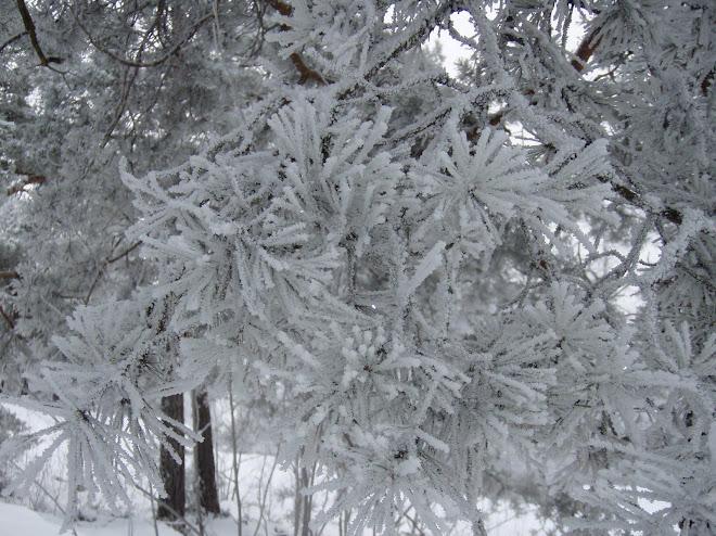 2010-01-13  Minus 10-15° och hög luftfuktighet...