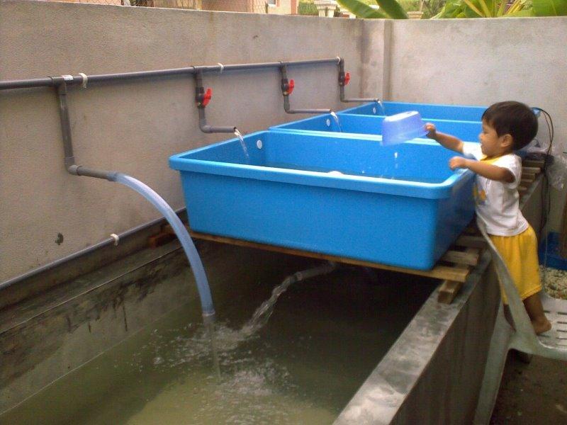 Affnan 39 s aquaponics aquaponics updates 5th july for Aquaponics grow bed