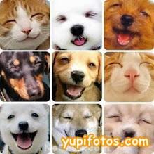Veja os nossos adoptados!