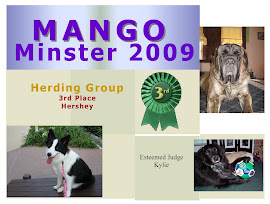 Mango Minster 2009 - Herding Group