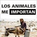 Apoya la Declaración Universal para el Bienestar de los Animales