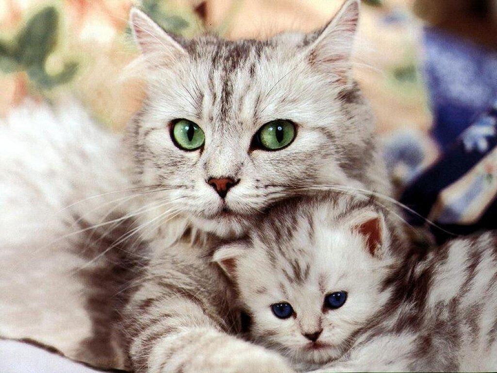 gambar kucing yang lucu
