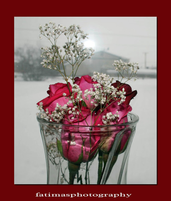 RED ROSES IN WINTER
