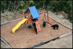bears at play