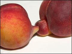 bad plum