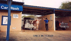 Texas cow wash