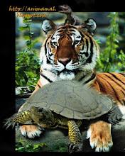 Wild Animal!!!