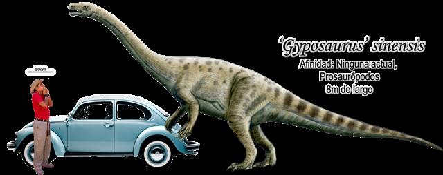 Gyposaurus' sinensis a escala