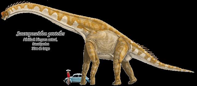 Sauroposeidon proteles a escala.
