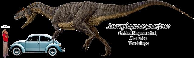 Saurophaganax maximus a escala basado en Allosaurus.