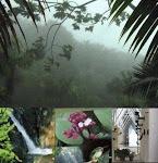 EL YUNQUE: RESERVA DE LA BIOSFERA DE UNESCO, UNA MARAVILLA NATURAL