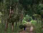 Kawasan Wisata Hutan Wanagama