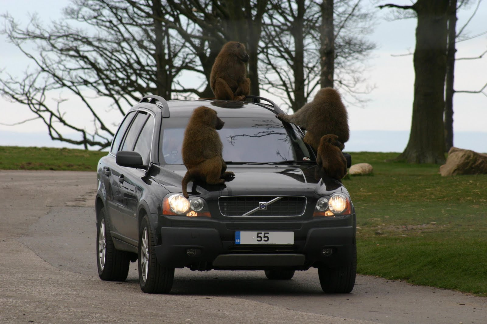 monkey+on+car.jpg