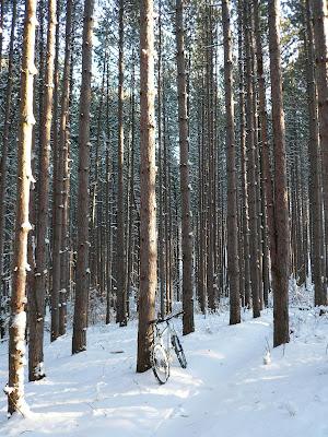 The Pines on Yankee Springs loop