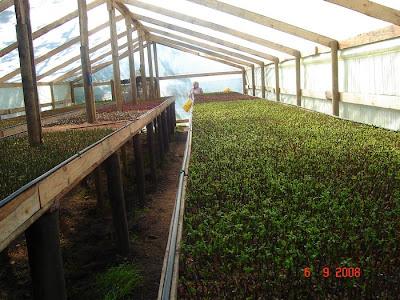 cultivando-los-tipos-de-fruta-arandanos-de-maria-elena