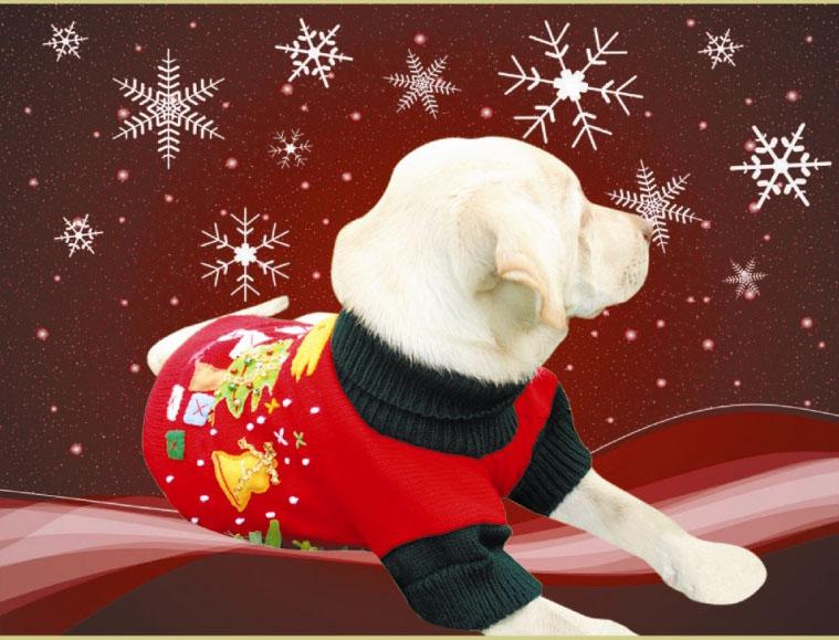 Etnika dog wear olfateando novedades para nuestras - Novedades para mascotas ...