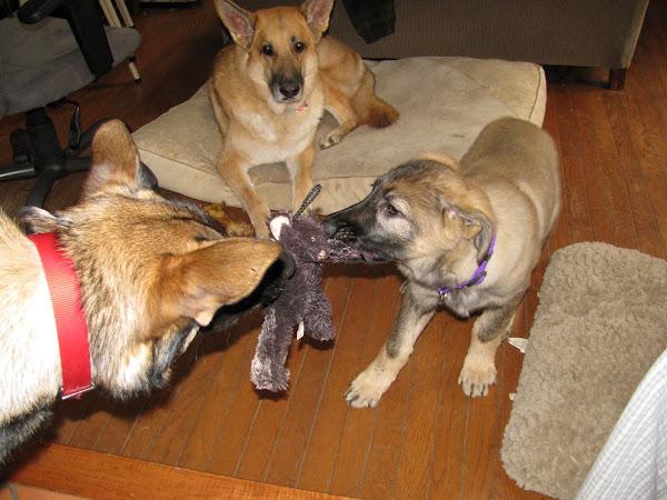 Abby shares her toys