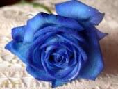 Mawar Biru itu....