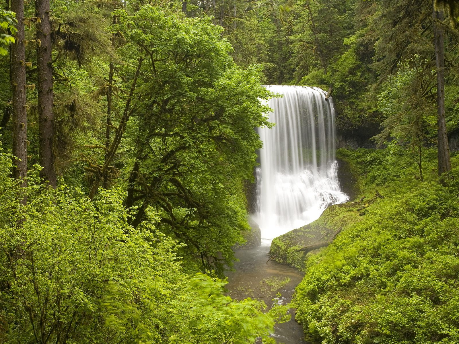 http://3.bp.blogspot.com/_kw1VD16J_Xw/RqoTH3tvSaI/AAAAAAAAAcE/sTNF1xyPjBw/s1600/Middle+North+Falls,+Silver+Falls+State+Park+in+Spring,+Oregon.jpg