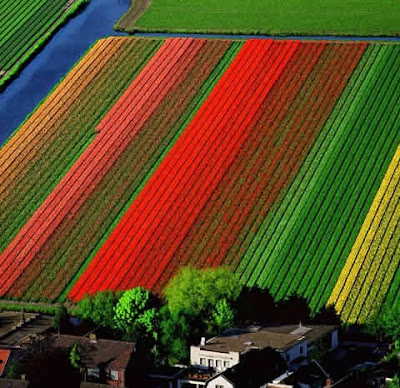 [Tulip+Fields+(2).jpg]