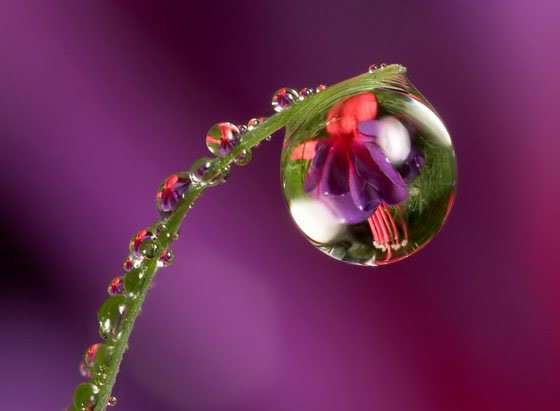 Hd Wallpapers 2012 Beautiful Water Drops Wallpapers