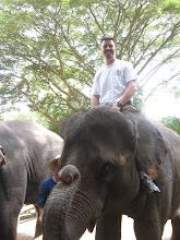 The Elephant Farm