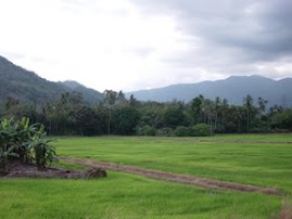 Sawah Pinggiran Desa