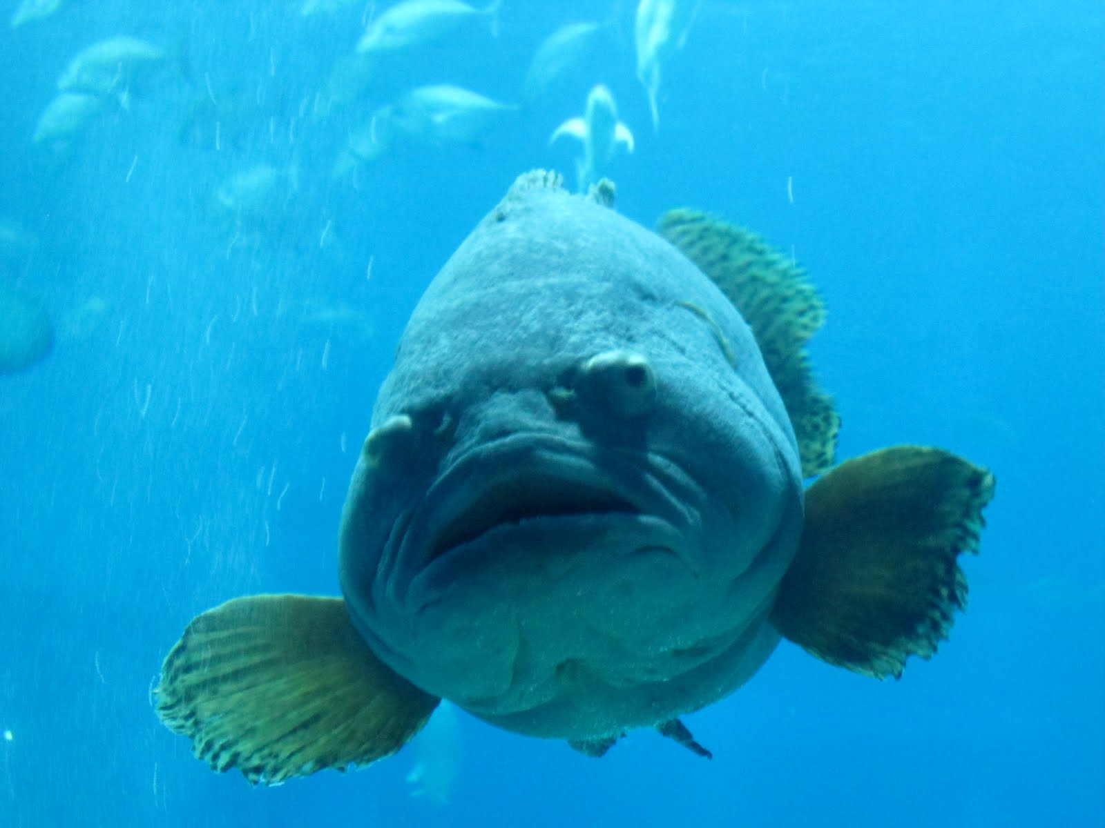 Clear headed fish for Ugly fish pictures