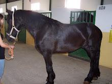 El caballo de mis sueños