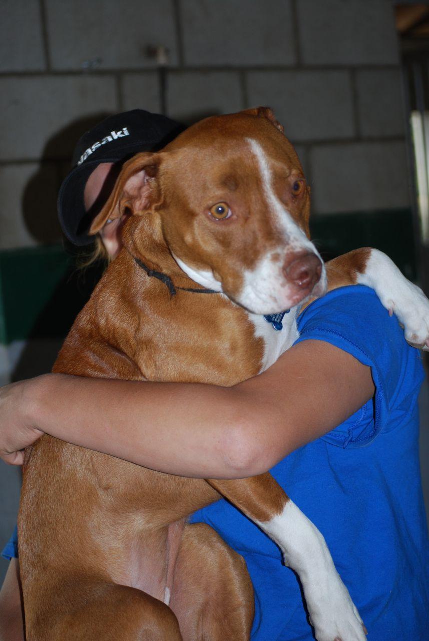 Can Rawhide Cause Diarrhea In Dogs