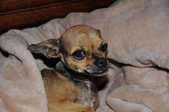 Heating Dog Bed For Chihuahua