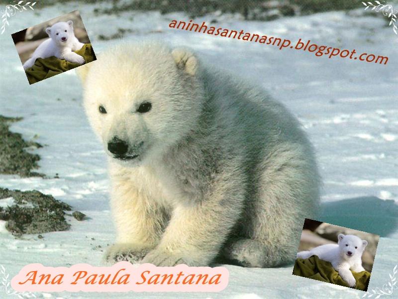 --- >    Ana Paula Santana    <---