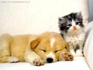 I cani i cani affettuosi for Cani giocherelloni