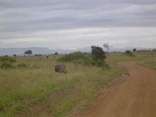 [day+safari,+nairobi+017.JPE]