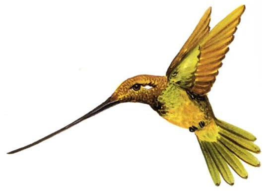 hummingbird clip art related keywords