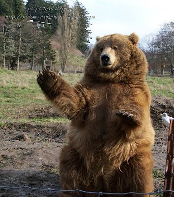http://3.bp.blogspot.com/_l7NZCSbtXLc/R7fZF0RK9qI/AAAAAAAAAgc/KIn17CQz_hE/s400/waving+brown+bear+1.jpg