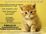 ¿Quieres adoptar un gatito(a)?