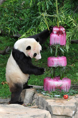 Image Result For Panda Birthday Cake