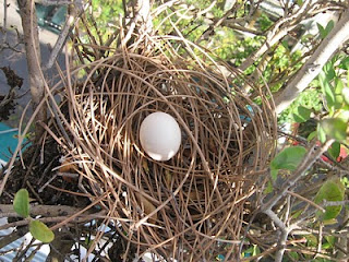 egg in the nest