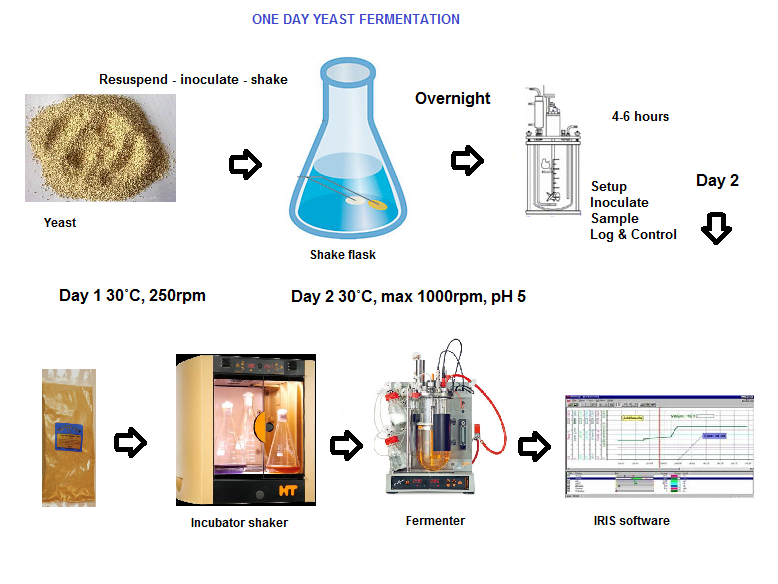 experiment to explore rate of fermentation Ethanol fermentation in batch experiments was carried out in triplicate with 50 g  −1 glucose solution as the sole carbon source for s cerevisiae the purpose of the batch experiment was to compare the amount of glucose concentration and ethanol production in batch fermentation and the icr.