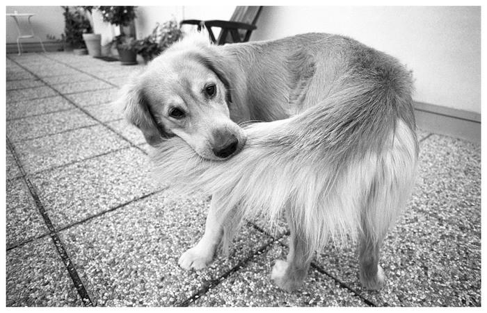 [Express] Persona 3 Perro+mordiendose+la+cola