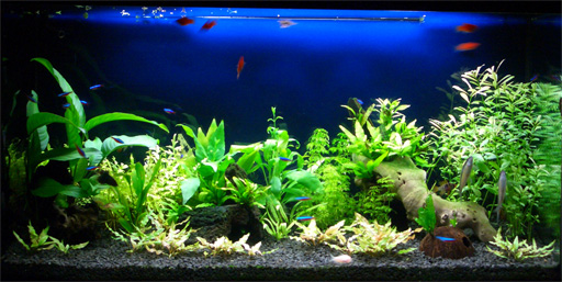 Gu a para armar un acuario con peces de agua dulce taringa for Peces de agua dulce para peceras