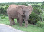 an elephant in Mc Carren Park...