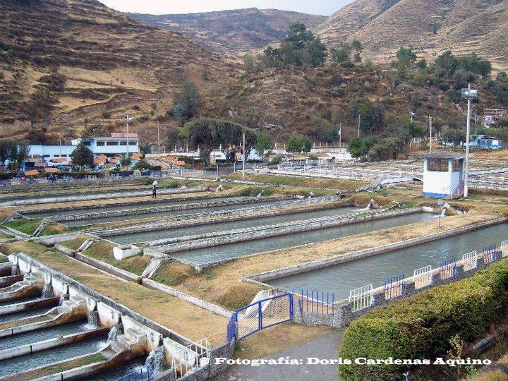 Noticias ingenio el hogar de las truchas for Crianza de truchas en estanques