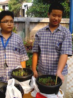 Mengamati Pertumbuhan Kacang Hijau