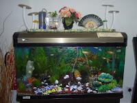 Akuarium Ikan Hiasan yang berjaya mendapat tempat dalam